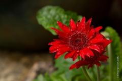 GSMD_GardenTour-39
